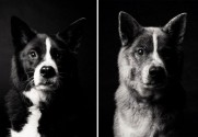Maddy — 5 years and 10 years - Copyright: Dog Years