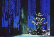 Der Claridge's Christmas Tree 2016, gestaltet von Sir Jony Ive, Chefdesigner von Apple und Marc Newson. Aufgenommen mit iPhone 7 Plus von Dan Rubin