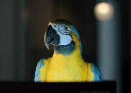 Laptop_Portrait